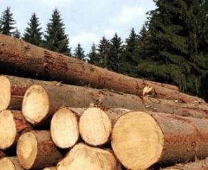 sawmill-logs